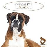 Boxer 2021 Quadratischer Haustierpflege-Hundekalender mit gratis 6-Monatsplaner für 2022, 30,5 x 30,5 cm, ideales Weihnachts- oder Geburtstagsgeschenk